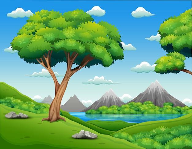 Paisaje del bosque con el fondo hermoso de la naturaleza