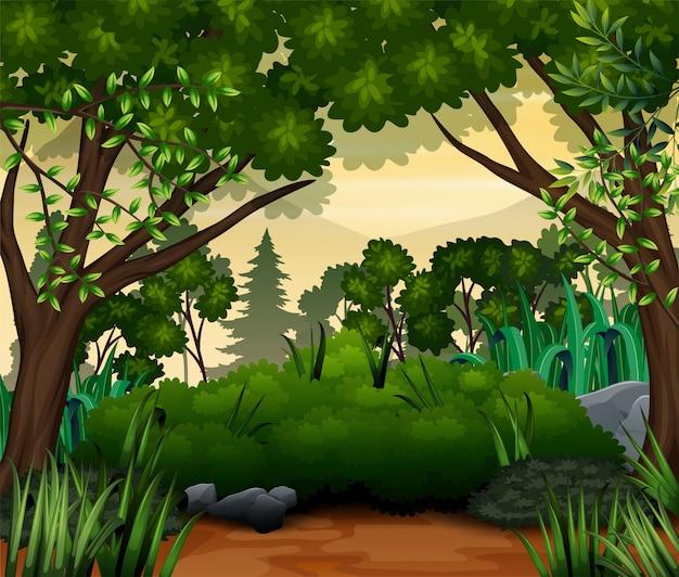 Un paisaje de bosque tropical verde con árboles y hojas.