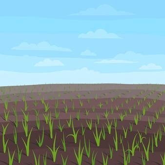 Paisaje de campo agrícola. brotes de plantas de trigo jóvenes en crecimiento.