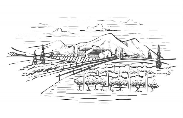 Paisaje rural con villa, plantación de vid y colinas.