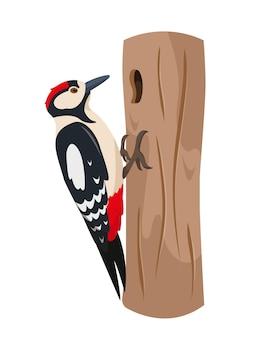 Pájaro carpintero en tronco de árbol.