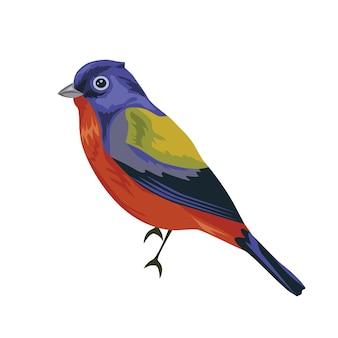 Pájaro del empavesado pintado a mano