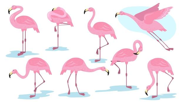 Pájaro flamenco rosado en conjunto plano de diferentes poses