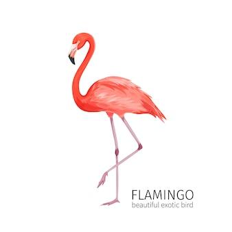 Pájaro flamenco