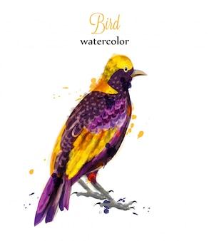 Pájaro tropical acuarela
