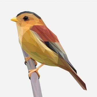 Pájaro tropical marrón