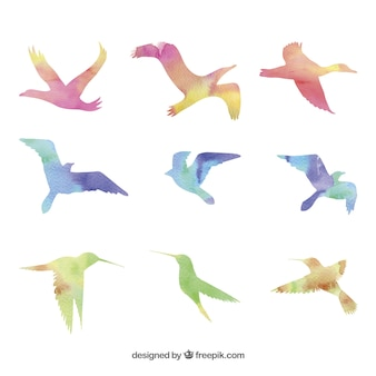 Pájaros de acuarela