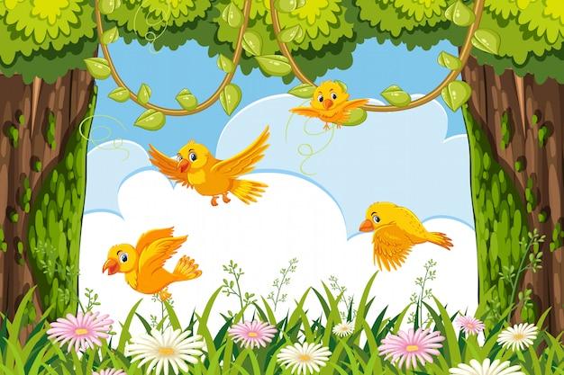 Pájaros amarillos en escena de la selva