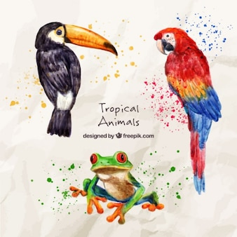 Pájaros exóticos de acuarela con una rana