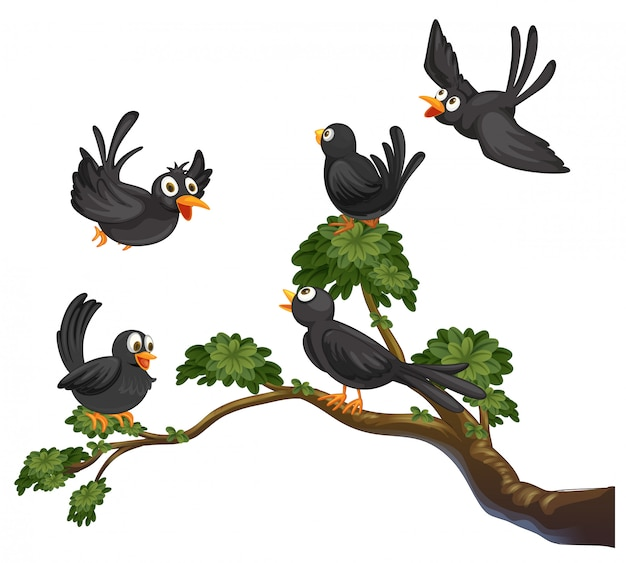 Pájaros negros