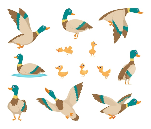 Pájaros salvajes. divertidos patos volando y nadando en el agua con alas marrones estilo de dibujos animados de aves vectoriales. pato pájaro salvaje, adorable fauna natural ilustración