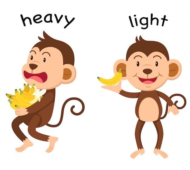 Palabras opuestas pesado y ligero vector