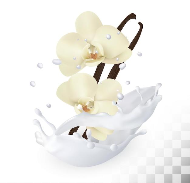 Palitos de vainilla con flores en un chorrito de leche sobre un fondo transparente