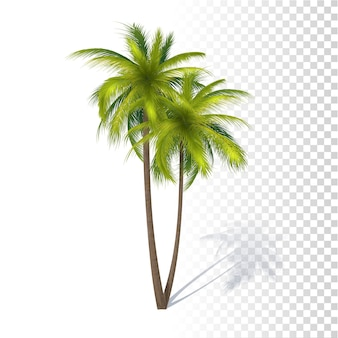 Palma de coco verde
