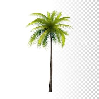 Palmera de coco