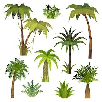 Palmera de dibujos animados. selva palmeras con hojas verdes, exótico bosque de hawaii, miami greenery coconut beach palms conjunto de vectores aislados