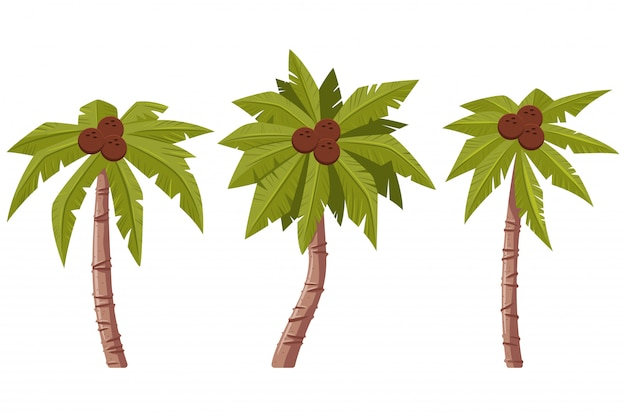 Palmera con hojas y cocos conjunto de dibujos animados aislado sobre fondo blanco.