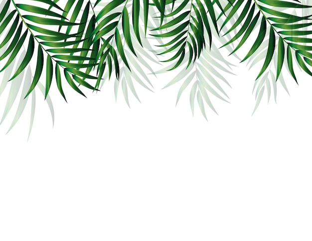 Palmera verde natural tropical. ilustración
