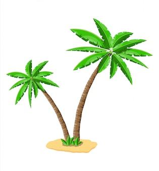 Palmera verde tropical. hojas de la selva