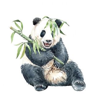 Panda de acuarela comiendo bambú