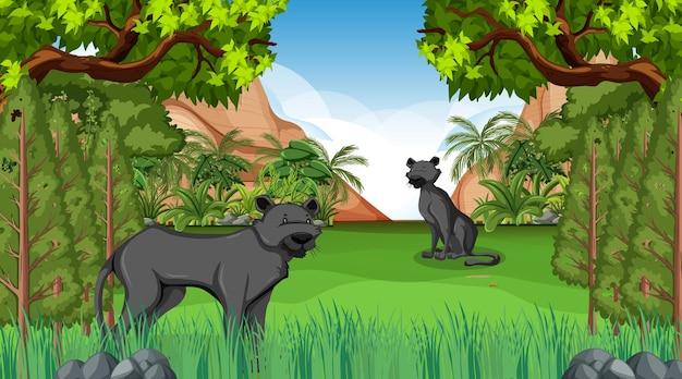 Pantera negra en la escena del bosque con muchos árboles.