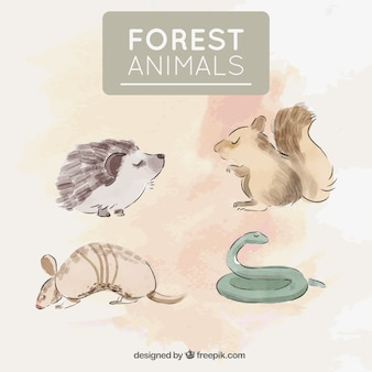 Paquete de cuatro animales salvajes pintados con acuarelas