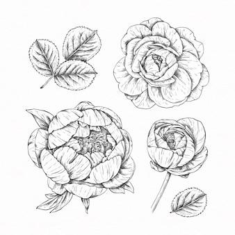 Paquete de flores dibujadas a mano