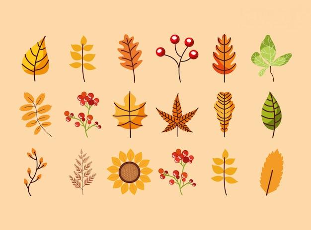 Paquete de hojas y flores de la temporada de otoño