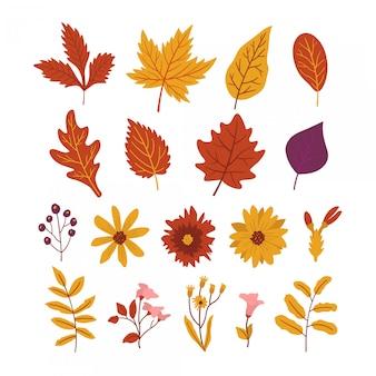 Paquete de hojas y hermosas flores de otoño.