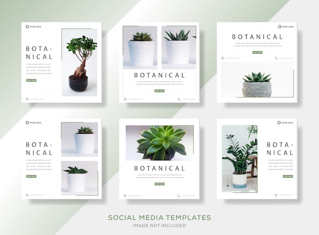 Paquete minimalista banner plantilla post para botánica.