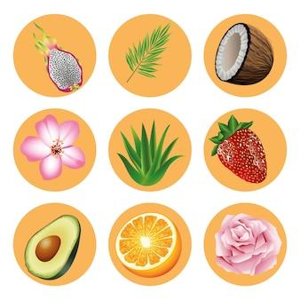 Paquete de nueve frutas y plantas tropicales establecer iconos ilustración