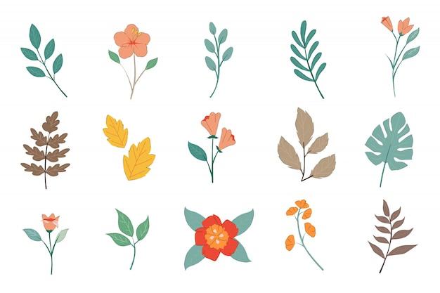 Paquete de plantas de colores