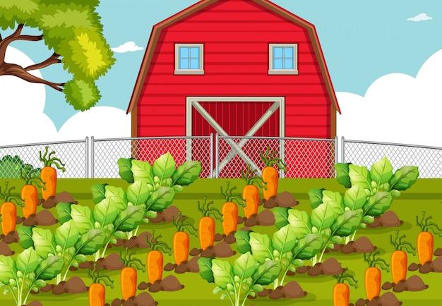 Parche de vegetales en una granja
