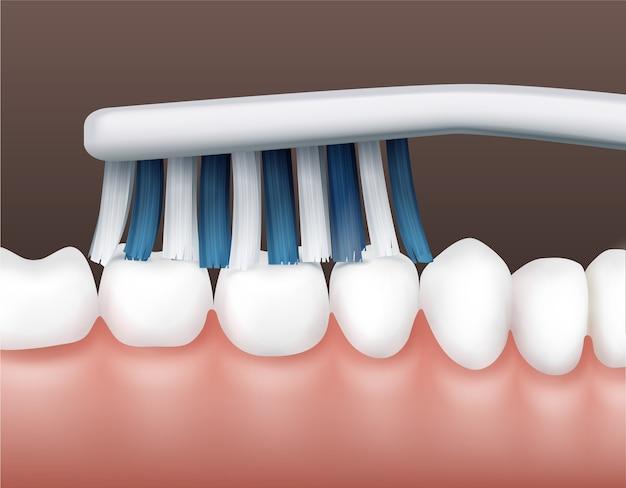 Parte del vector de la cavidad humana con dientes blancos limpios y vista lateral del cepillo de dientes rayado