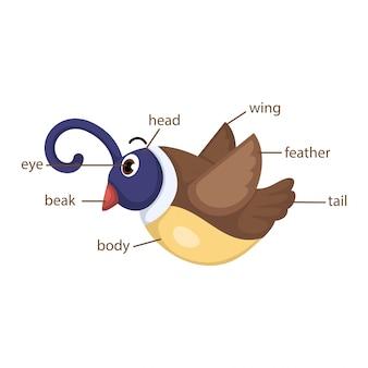 Parte del vocabulario de las aves del vector del cuerpo