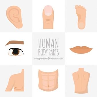 Partes del cuerpo humano dibujadas a mano