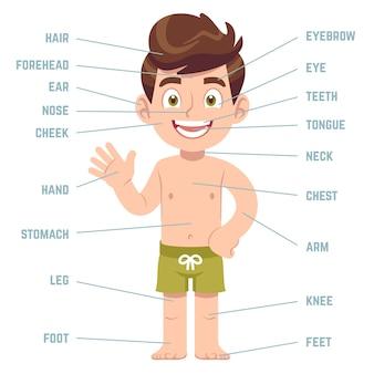 Partes del cuerpo del niño.