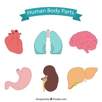 Partes del cuerpo dibujadas a mano