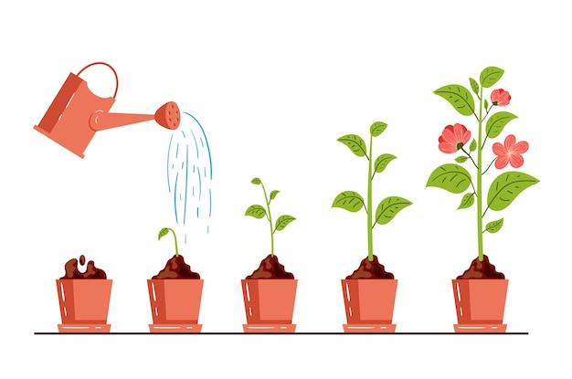 Pasos de la etapa del proceso de crecimiento de la planta de flores jardinería diseño gráfico ilustración de estilo moderno de dibujos animados