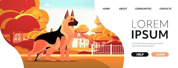Pastor alemán caminando al aire libre lindo perro peludo amigo humano concepto de animal doméstico