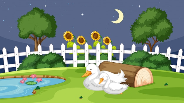 Pato lindo durmiendo sobre hierba