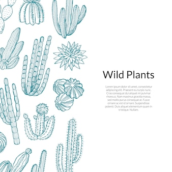 Patrón de cactus plantas de cactus silvestres dibujadas a mano