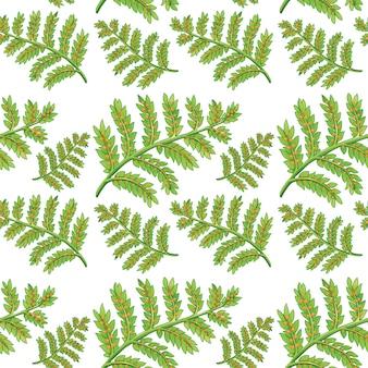 Patrón sin costuras de helecho verde