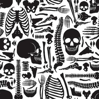 Patrón de esqueleto de huesos humanos
