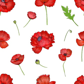 Patrón sin fisuras con la flor de amapolas rojas. fondo dibujado a mano brillante colorido.