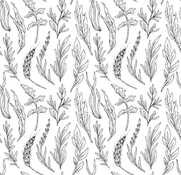 Patrón sin fisuras con hierbas dibujadas a mano aislar sobre fondo blanco.