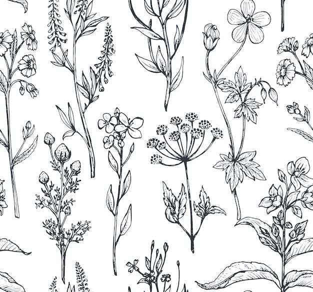 Patrón sin fisuras con hierbas y flores dibujadas a mano sobre fondo blanco.