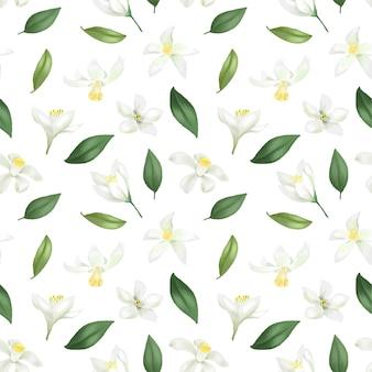 Patrón sin fisuras con hojas verdes dibujadas a mano y flores de limón (lima) sobre un fondo blanco