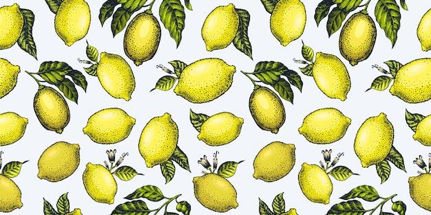 Patrón sin fisuras de limón.