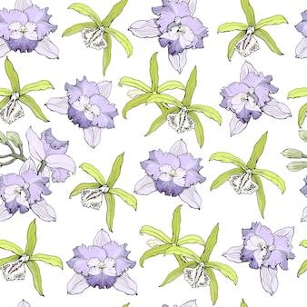 Patrón sin fisuras con orquídeas cattleya textura sin fin para su diseño vector dibujado a mano